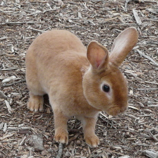 Baby Rabbits - Indoor Pet Cages, Outdoor Bunny Hutches, and